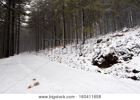 Winter forest landscape with frozen impassable road at Troodos mountains in the island of Cyprus
