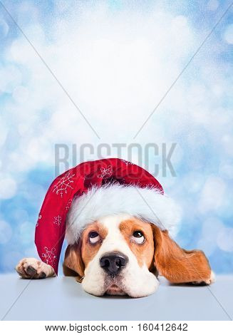 Cute Beagle In Red Santa Hat On Blue Winter Background