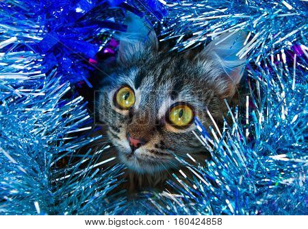 Close-up Kitty In The Tinsel.