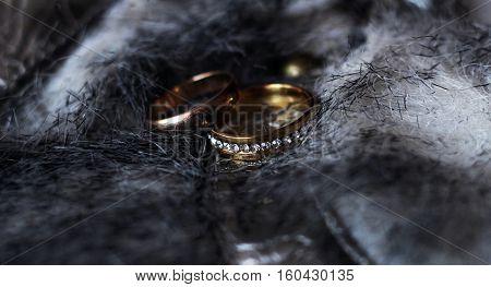 Wedding rings on beautiful grey fur, lux