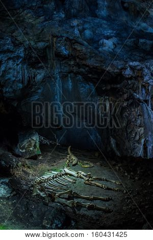 Crimea, Russia - September 2016. The skeleton of a baby mammoth lying in the karst cave of Emine Bair Hosar in Chatyr-Dah mountain in Crimea.