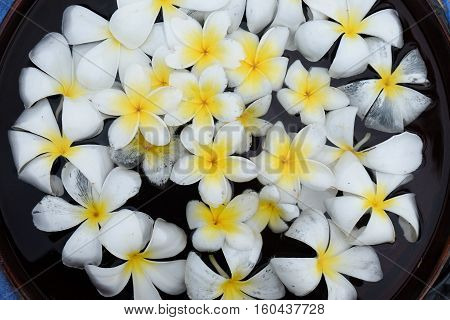 Plumeria flowers on water in the bowl Thailand