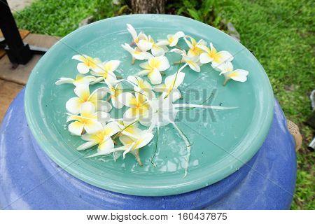 Plumeria flowers on water in the bowl decoration in gaden Thailand