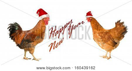 Rooster and hen isolated on a white background. Rooster and hen on New year postcard. Rooster, symbol of New 2017 - according to Chinese calendar Year of red fiery cock.