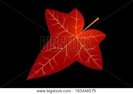 Ivy , ivy leaf , vector , illustration,