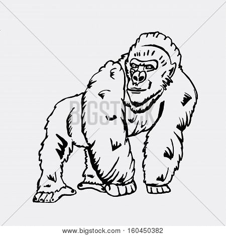 Hand-drawn pencil graphics, monkey, gorilla. Engraving, stencil style. Black and white logo, sign, emblem, symbol. Stamp, seal. Simple illustration. Sketch.