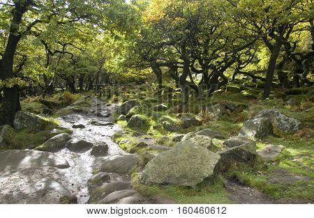 Twisted trees on the Longshaw Estate, Peak District, UK