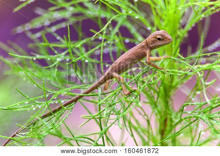 Real lizard resting on a wet green leaf with blur background