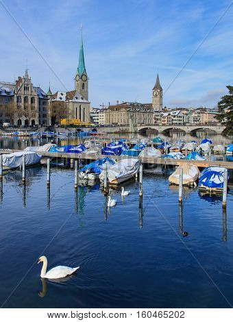 Zurich, Switzerland - 18 January, 2016: swans swimming on the Limmat river, Zurich City Hall building, towers of Fraumunster and St. Peter Church in the background. Zurich is the largest city in Switzerland.