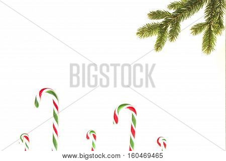 Christmas composition. Green Christmas tree twings and candy canes on white background. Top view, flat lay. Copy space for text. Winter holidays concept
