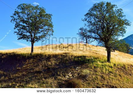 Peaceful scene of Oak Trees on top of a hill taken in the Western Sierra Nevada Foothills, CA