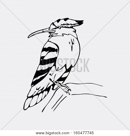 Hand-drawn pencil graphics, hoopoe, hornbill bird. Engraving, stencil style. Black and white logo, sign, emblem, symbol. Stamp, seal. Simple illustration. Sketch.