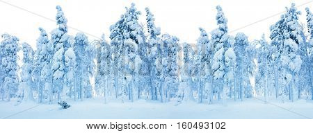 Winter border -  Snowy Forest, frozen trees and a lot of snow - Winter Landscape background