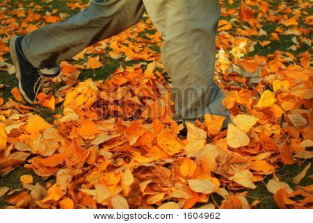 Walking Through Fall Leaves