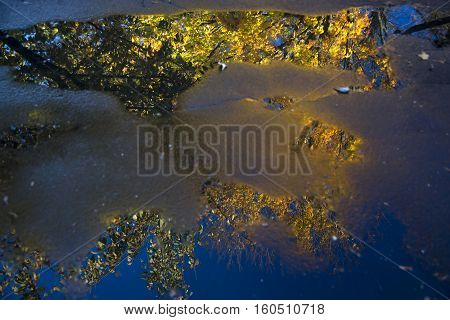 Tree with colorful leaves reflected in puddle