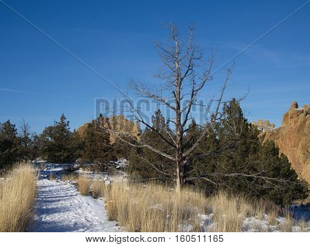 A bare tree in the wild grasses beside a snow covered trail in Smith Rocks State Park in Central Oregon on a sunny winter day.