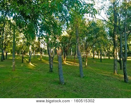 Trees and grass in a sunset, in an atmosphere of tranquility
