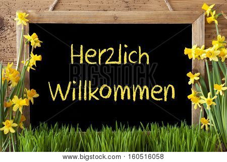 Blackboard With German Text Herzlich Willkommen Means Welcome. Spring Flowers Nacissus Or Daffodil With Grass. Rustic Aged Wooden Background.