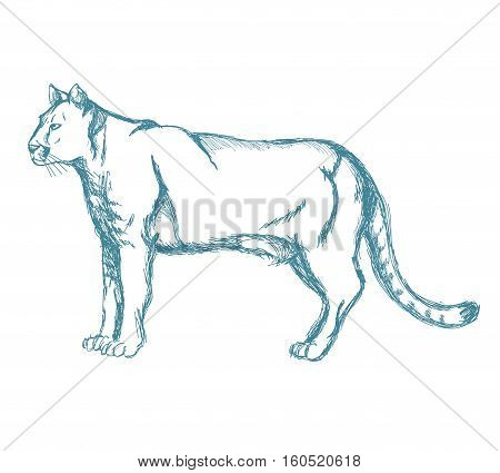 panther sketch blue vintage vector illustration eps 10