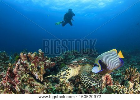 Sea Turtle, Angelfish and scuba diver underwater photographer