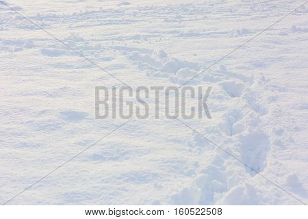 Close Up Of Footmarks In Fresh Snow