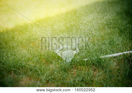 Water sprinkler in action on a hot summer day