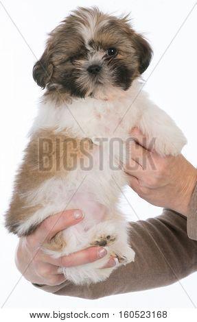 puppy with three legs