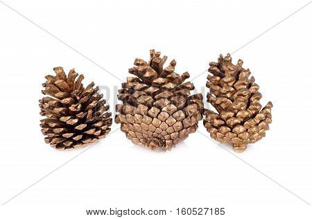 dry conifer cones for decoration on white background