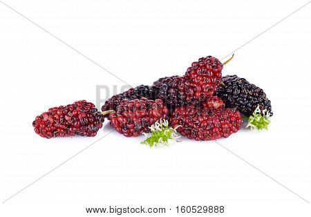 ripe mulberry fruit on a white background