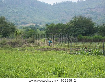 Nicaraguan peasant working the land to continue the cultivation of some basic grains,