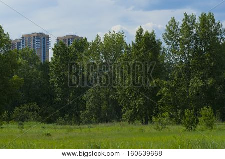 Summer landscape behind city boundaries on a background high trees and houses
