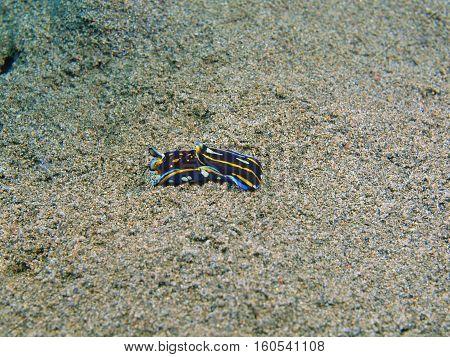 The surprising underwater world of the Bali basin, Island Bali, Puri Jati, true sea slug