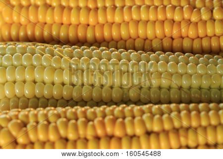 Golden Corn Texture