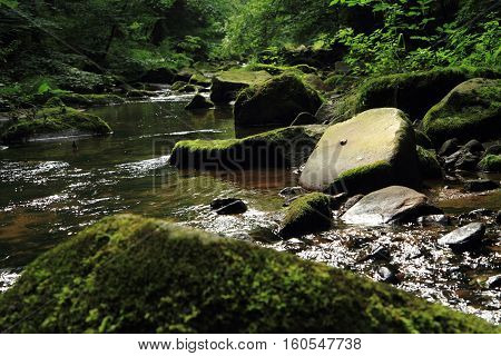 River In The Green Spring Forest