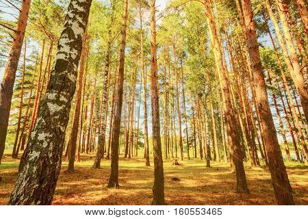 sunny forest on the shore of  lake