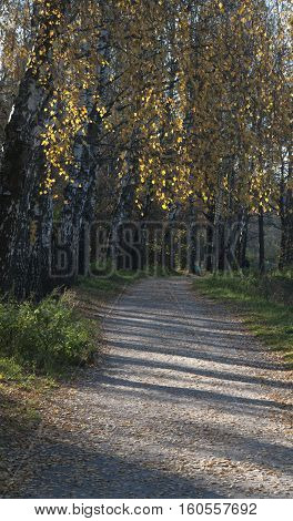 Autumn landscape with a path in Sokolniki park Russia Moscow