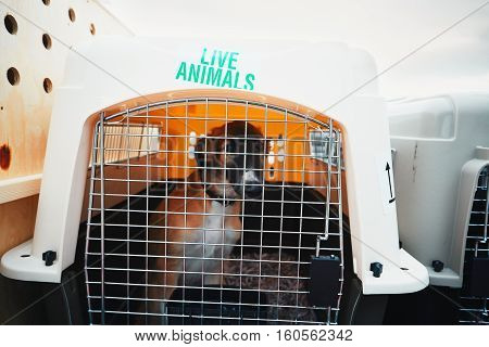 Dog traveling by airplane. Box with live animals at the airport.