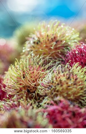 Closeup of rambutan, a hairy fruit native to southeast Asia, at a Thailand night market
