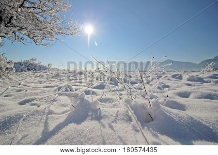 White Winter Landscape With Snow And Trees