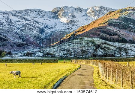 Sunlit field with sheep, beside it a farm track and beyond snow covered Crinkle Crags at Langdale, in the English Lake District, Cumbria.