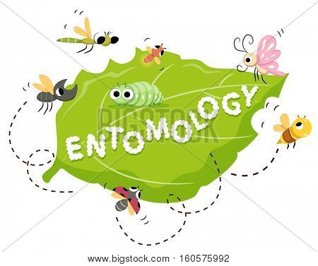Typography Illustration Featuring the Word Entomology Written on a Leaf Surrounded by Insects