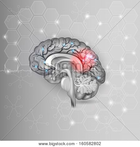Human Brain With Red Light Abstract Light Grey Hexagon Background And Normal Cardiogram