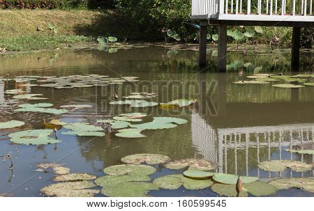 balcony at waterside of pond with lotus water lily