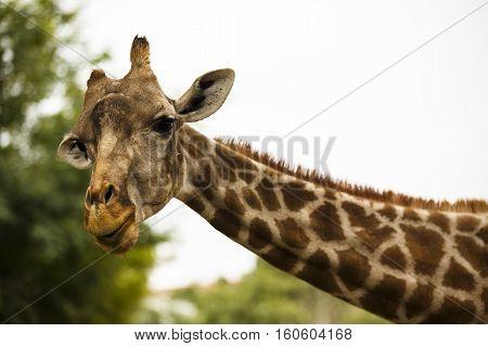 zebra in a wildlife park zoo safari