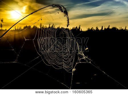 Cobweb in the rays of the rising sun in the background silhouette of the forest