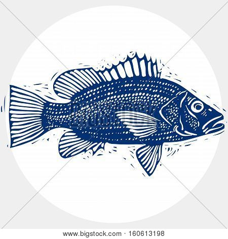 Vector Drawing Of Freshwater Fish With Fins, Underwater Life Illustration. Organic Seafood Graphic S