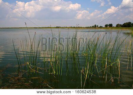 Lake / Reeds on the lake. Reeds growing on the banks of the lake.