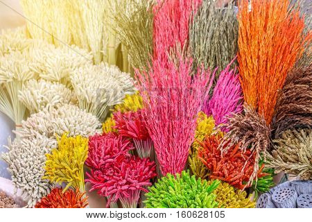 Closeup view of colorful grass flower background