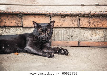 Lonely black cat on the street thailand