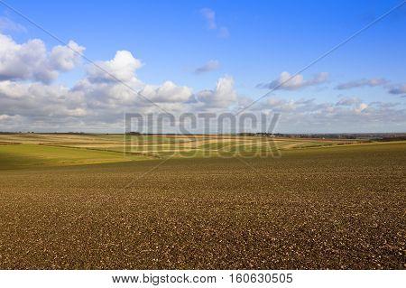 Extensive Farming Landscape